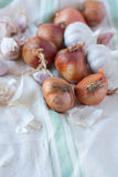 Garlic and onion shallot Royalty Free Stock Images