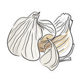 Garlic open Royalty Free Stock Images