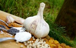 Garlic and other spices. Garlic, other spices and fresh olive oil royalty free stock photos