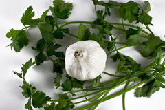 Garlic with parsley on the  background. Garlic with fresh green parsley on the white  background Stock Image