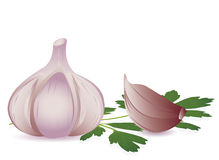 Garlic and parsley Stock Images