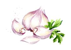 Garlic with parsley. Watercolor hand drawn illustration, isolated on white background.  Stock Image