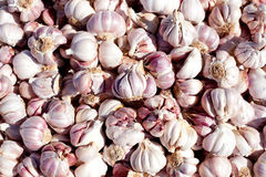 Garlic pattern texture in food market Stock Image