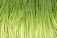 Garlic peduncle. The background of fresh garlic peduncle Royalty Free Stock Photo