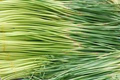 Garlic peduncle Royalty Free Stock Photography