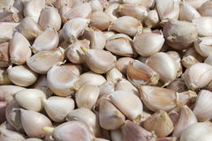 Garlic petal cut Royalty Free Stock Images