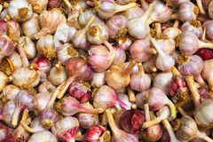 Garlic Pile Royalty Free Stock Image