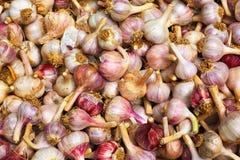 Garlic Pile royalty free stock image