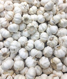 Garlic. Pile of garlic on display in grocery store Stock Images