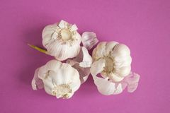 Garlic on pink paper. Background Royalty Free Stock Image