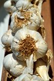 Garlic. Placed to dry in the beam Royalty Free Stock Images