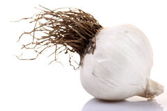 Garlic pod Royalty Free Stock Photography