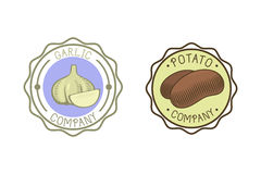 Garlic and potato badge vector illustration. Stock Image