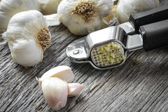 Garlic Press and Garlic Bulb Close Up Stock Photo