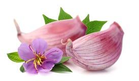 Garlic press and garlic. stock photos