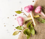 Garlic purple with a stem on the background of coarse burlap. Royalty Free Stock Image
