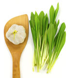 Garlic and ramsons. Garlic with small wooden shovel and ramsons Royalty Free Stock Photos