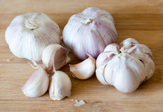 Garlic: realistic approach to food ingredients Stock Image