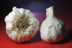 Garlic on red background with shadow stock photo