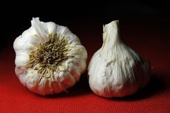 Garlic on red background with shadow stock image