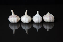 Garlic with reflection Stock Photography