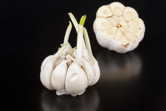 Garlic With Reflection Stock Image