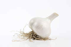 Garlic with root Royalty Free Stock Image