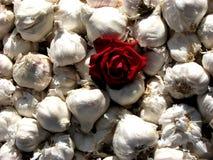 Garlic Rose. A red rose in garlic Stock Photo