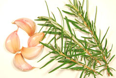 Garlic and Rosemary royalty free stock photos