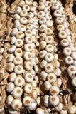 Garlic rows food background pattern Stock Image