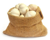 Garlic in a sack Royalty Free Stock Images