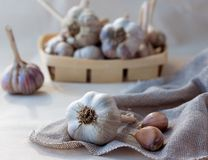 Garlic on sackcloth napkin. With wicker basket full of garlic on the background Royalty Free Stock Photo