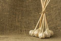 Garlic on a sacking Stock Images