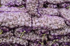 Garlic in sacks. Bunch of garlic in a plastic bags, ready for sale Stock Photography