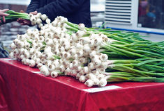 Garlic on sale Royalty Free Stock Image