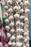 Garlic for sale Stock Photography