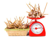Garlic on scales and in a basket Stock Photography