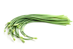 Garlic scapes stock photos