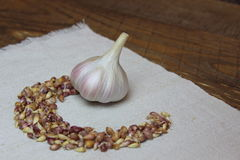 Garlic with seeds on linen cloth Royalty Free Stock Images