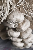Garlic in sepia. A bunch of garlic heads, sepia tone photo royalty free stock photo