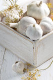 Garlic in a shabby wooden box Royalty Free Stock Images
