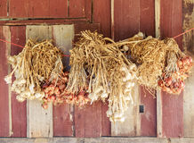 Garlic and shallots,. Garlic and shallots Tied together and then hung on a rope. As a way of keeping people in Thailand Stock Images