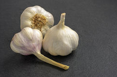 Garlic on slate plate Stock Photography