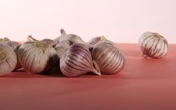 Garlic solo Stock Image