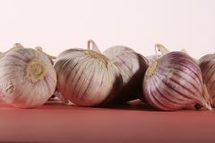 Garlic solo Royalty Free Stock Image