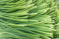 Garlic sprouts stock images