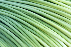 Garlic sprouts royalty free stock photo
