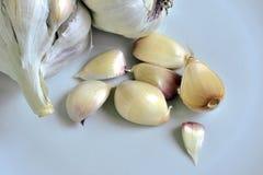 Garlic. Still life Stock Photo