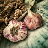 Garlic, Still Life Photography, Vegetable, Plant Royalty Free Stock Photos