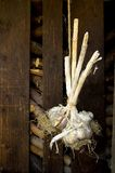 Garlic on a string. Some drying garlic nodules hanging from a hemp string in front of a shed royalty free stock images